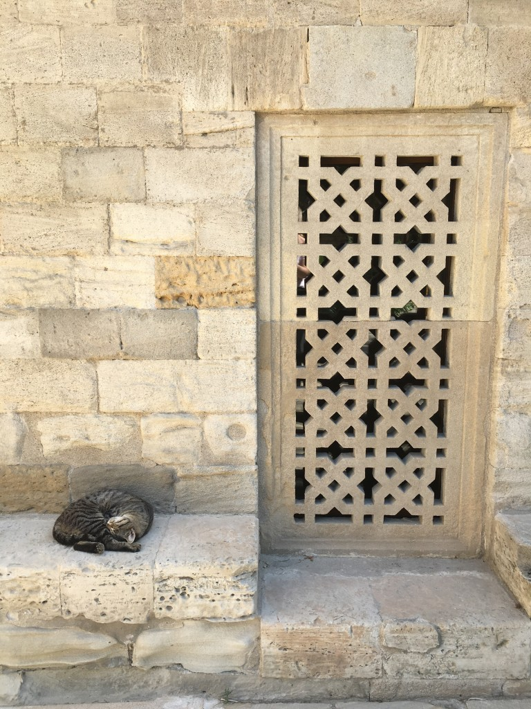 Cat taking a nap in the quiet surroundings of the Palace Mosque
